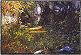 Joseph Raffael Watercolor Paintings made in 1998