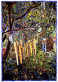 Joseph Raffael Watercolor Paintings made in 2002